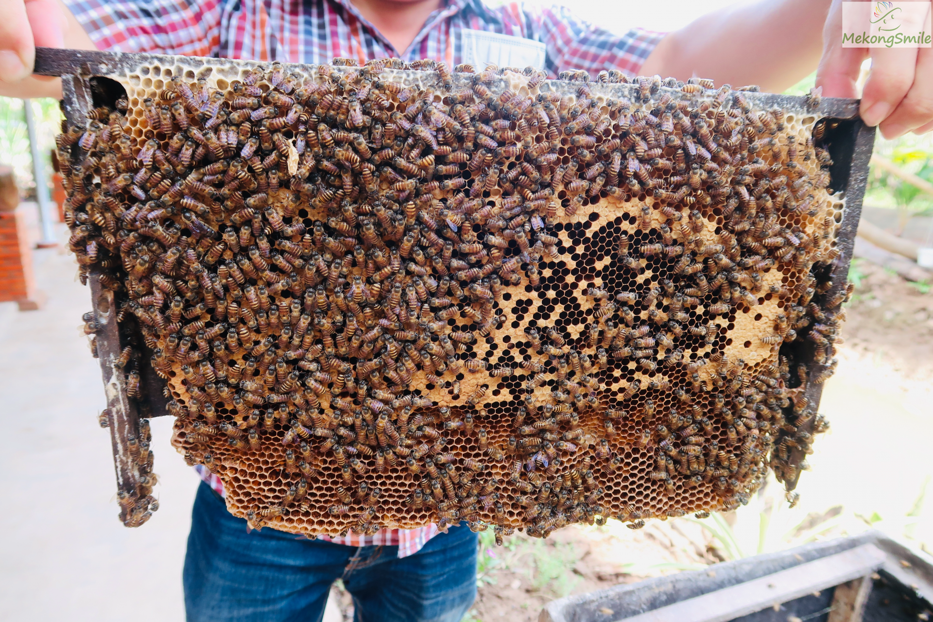 Real honey factory in Ben Tre - the land of coconuts
