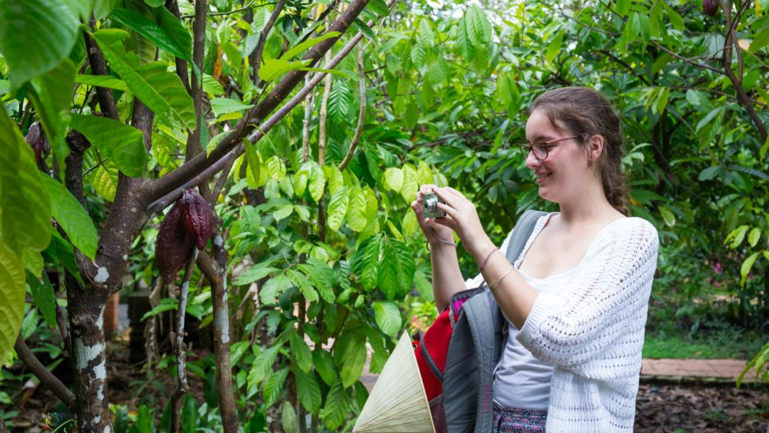 Organic Ca cao farm in Mekong Delta