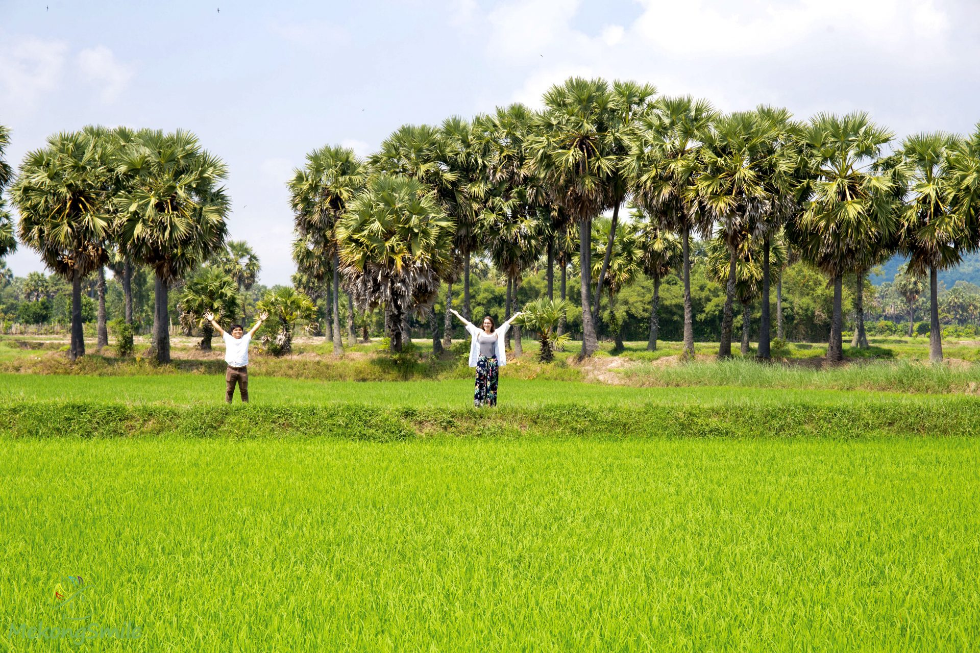 Sugar palm fields - Mekong Delta 1 day tour