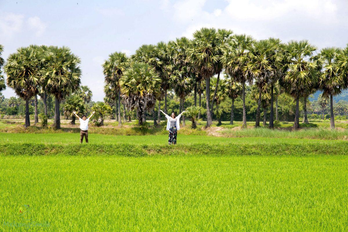 Sugar palm fields - Mekong Delta 1 day tour