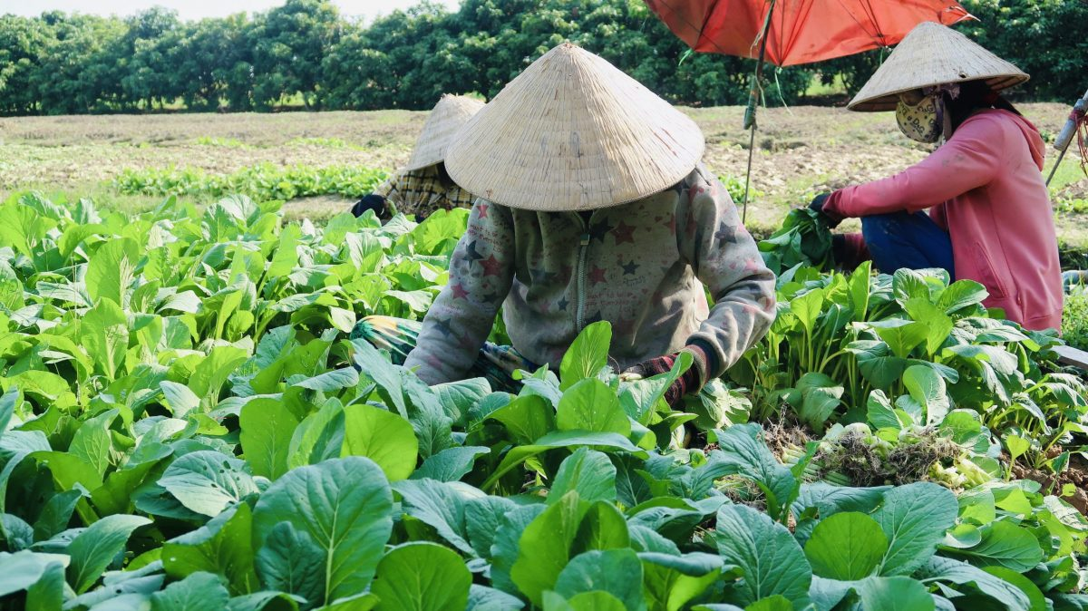 Local vegetable farm - Mekong Small cana tour