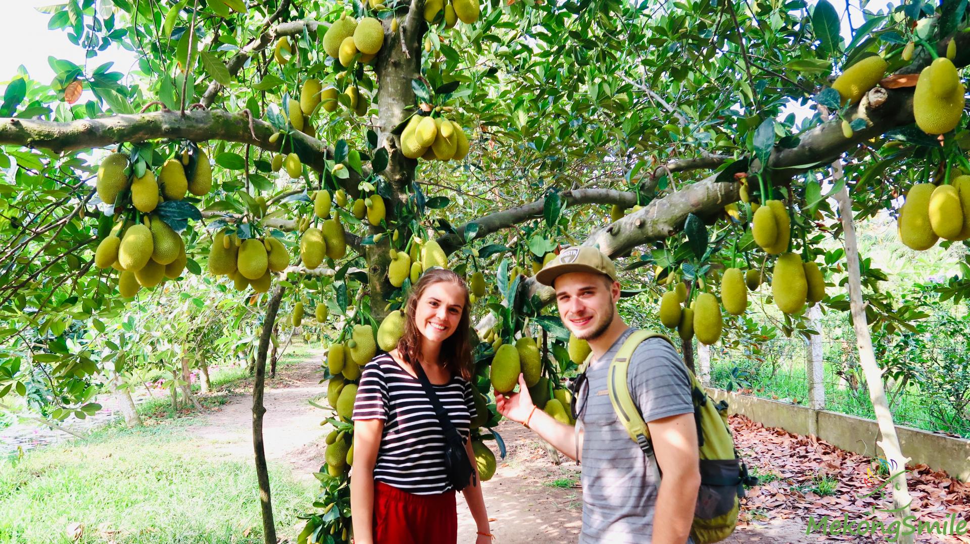Ba Cong fruit garden - the most beautiful fruit garden in Can Tho