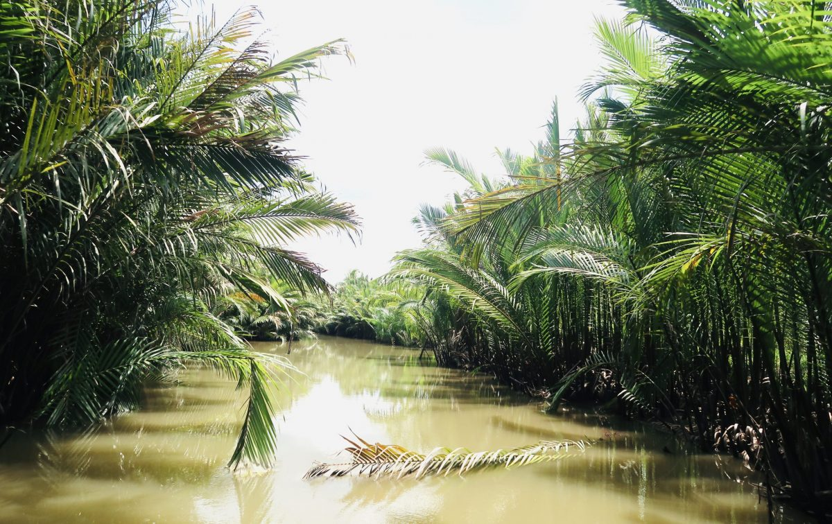 Spectacular water coconut canal in Mekong