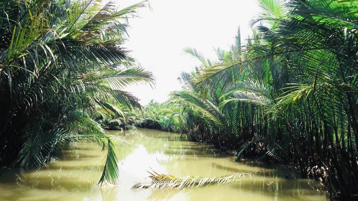 Beautiful coconut small canal in Ben Tre