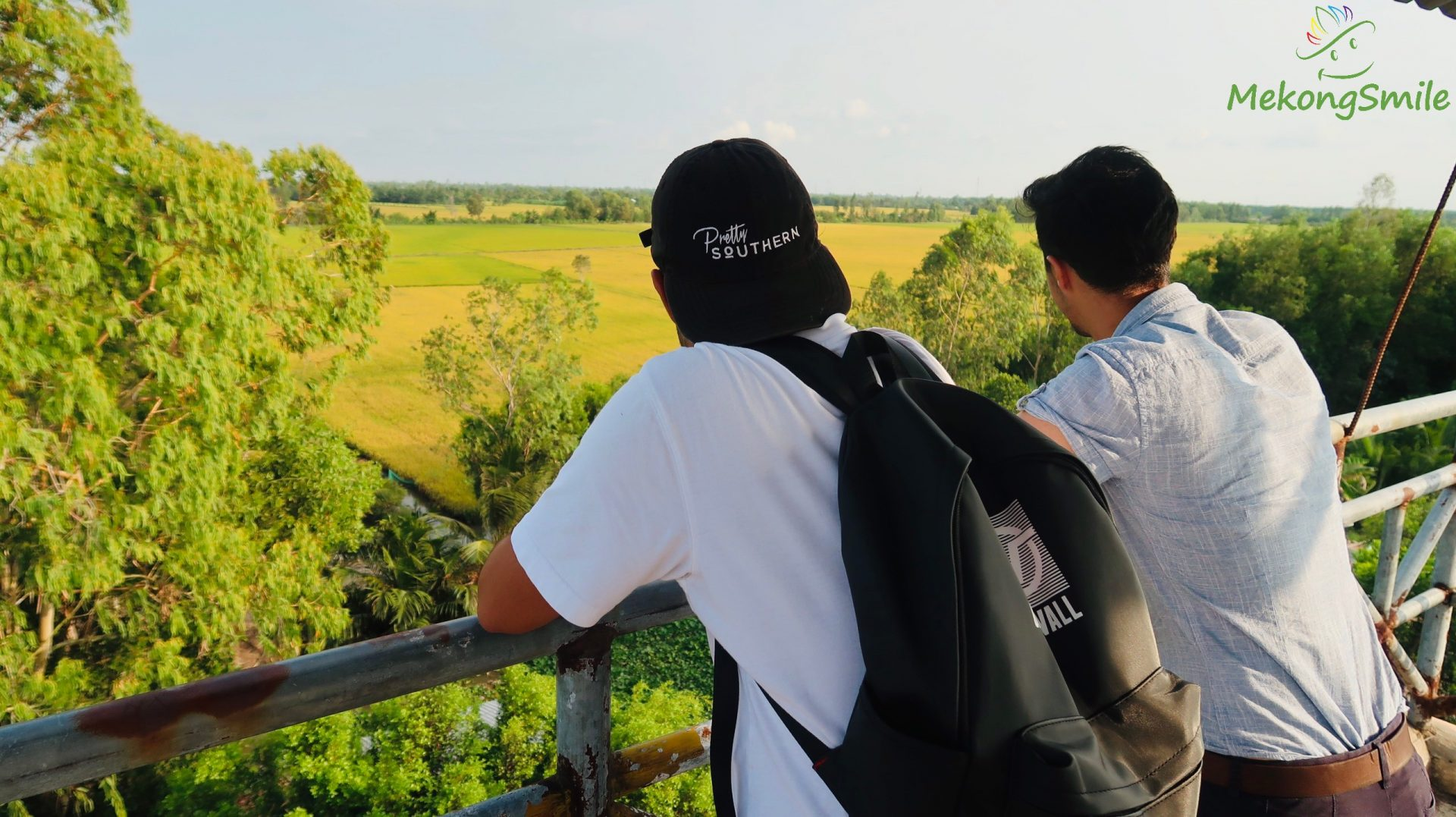 The beautiful rice field near Lung Ngoc Hoang nature reserve - Can Tho forest and wildlife tour