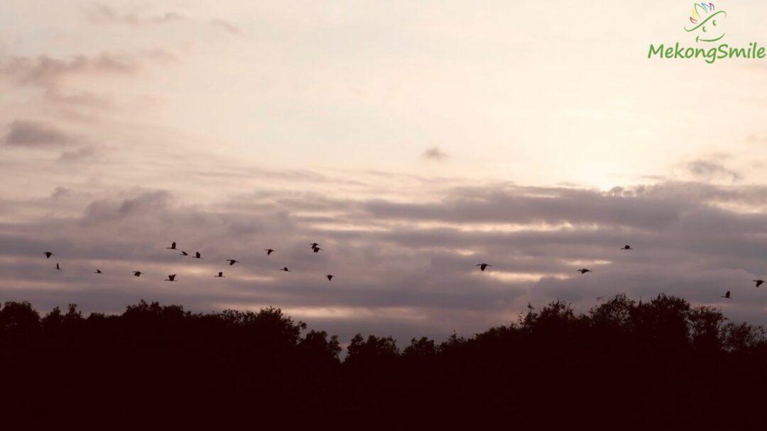 Wildlife birds flies in the romantic sunset