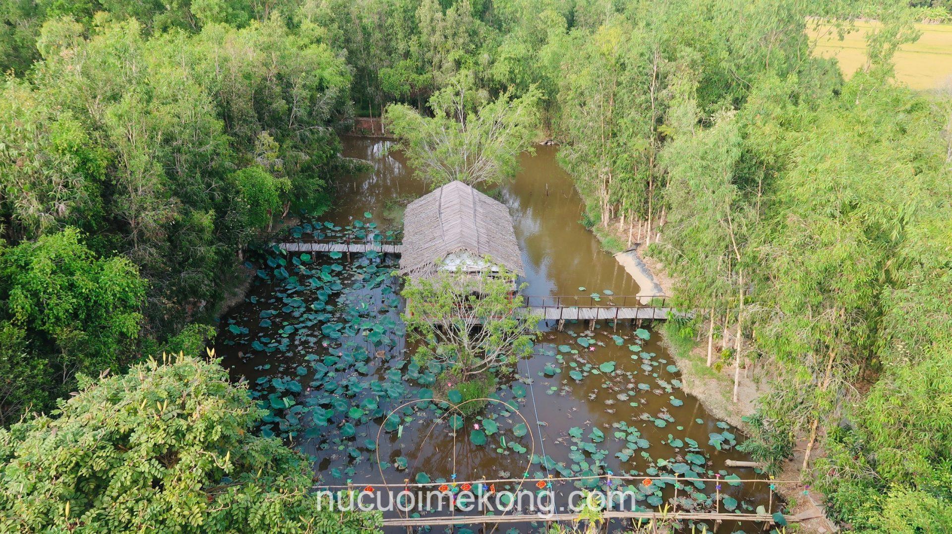 wet-land-conservation-mekong-delta-forest