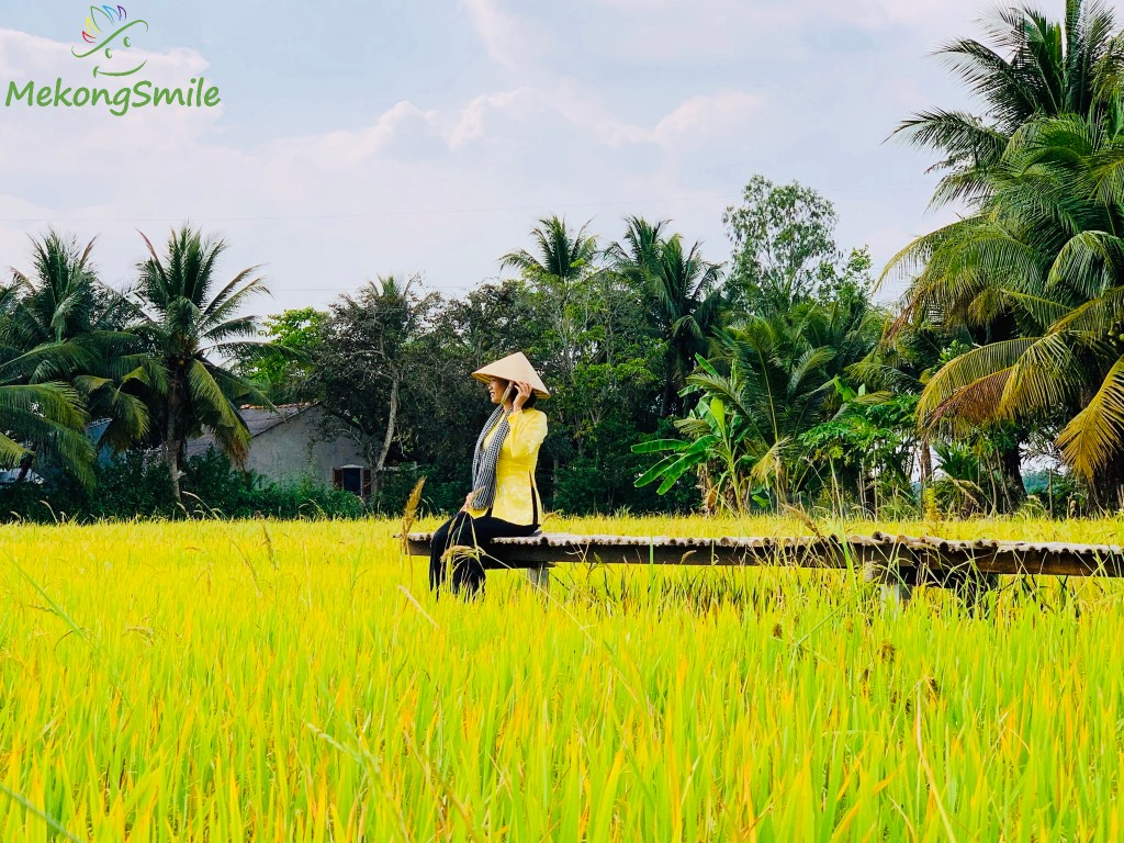 Beautiful rice field in the countryside