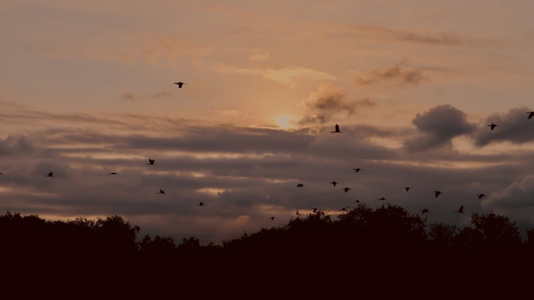 Birds flying in the forest at sunset