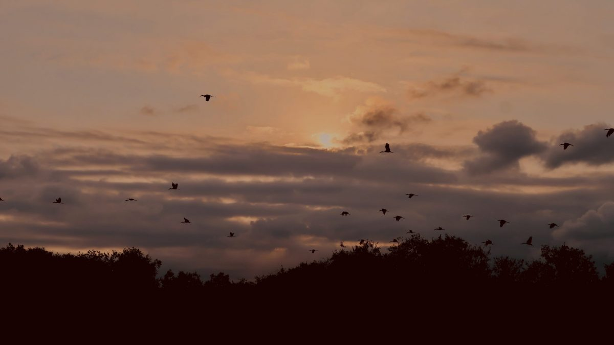 Birds flying in the forest at sunset - Mekong Delta 3 days tour Can Tho - Bac Lieu - Soc Trang