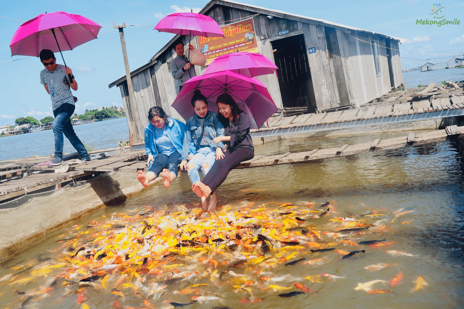 Fish massage in a floating fish farm in Con Son island