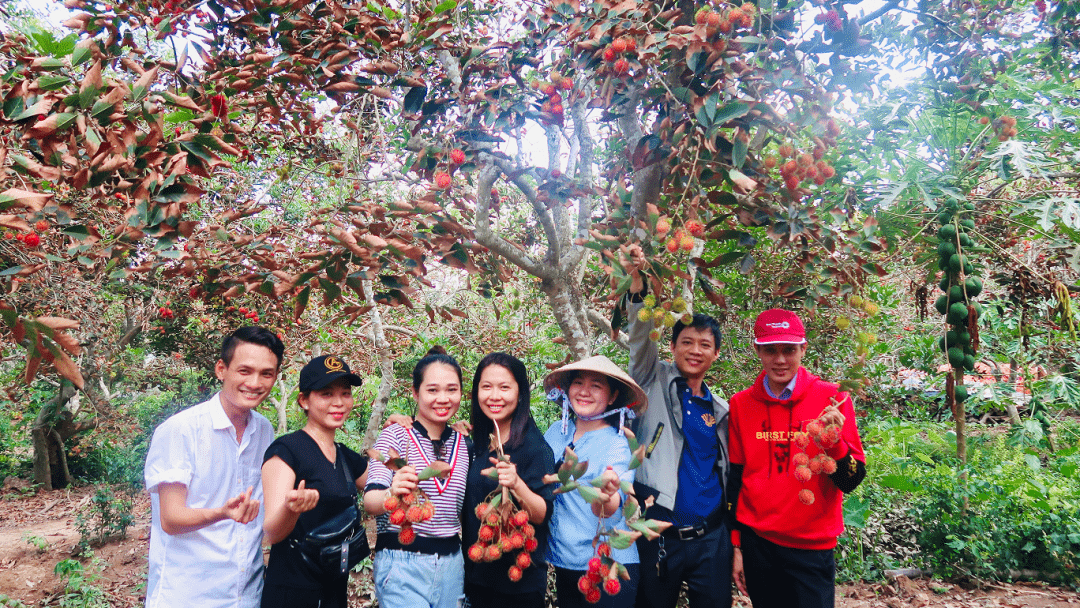 Tropical fruit garden in Con Son island