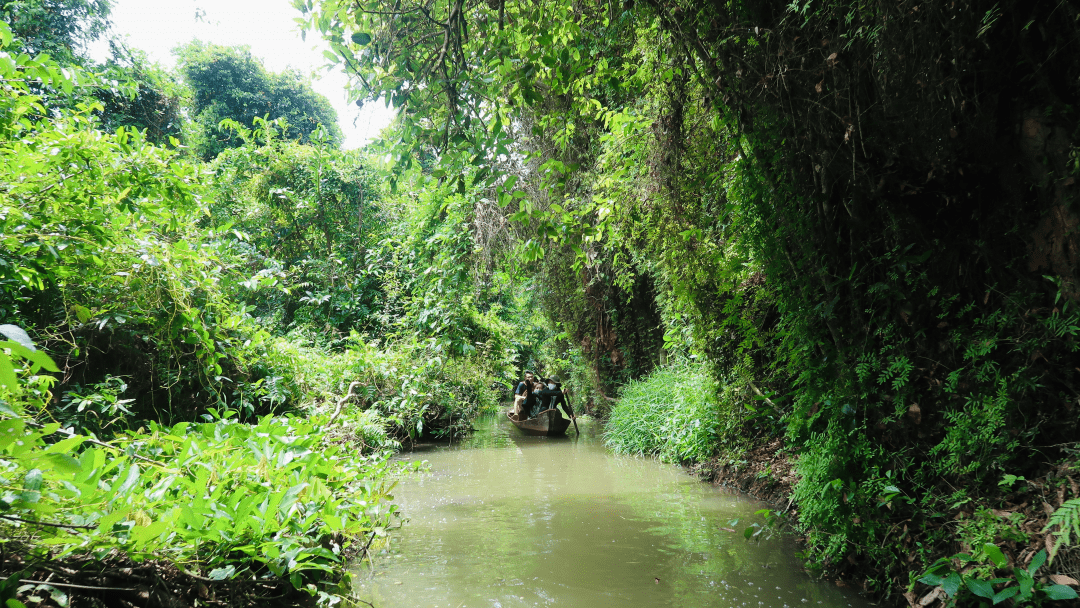 A small sampan boat ride in Mekong delta - Xeo Quyt forest tour