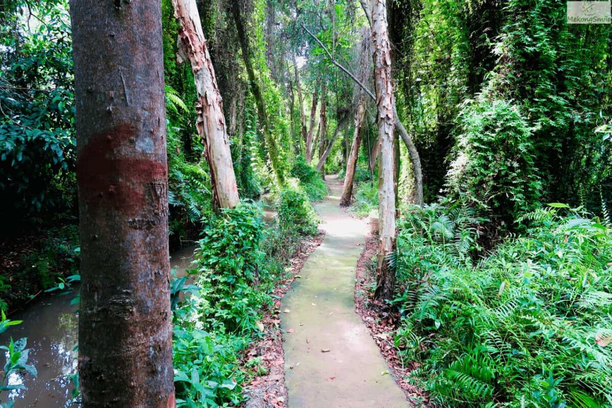 A small beautiful path in Xeo Quyt forest