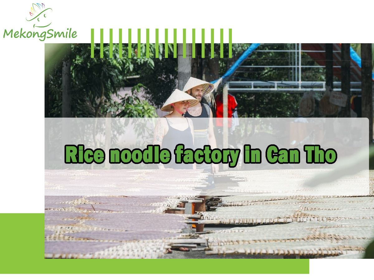 Rice noodle factory in Can Tho