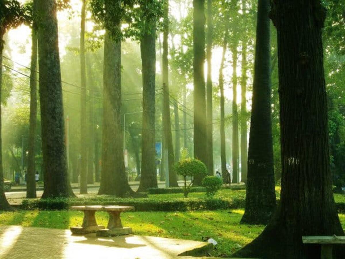 An evergreen park - Tao Dan