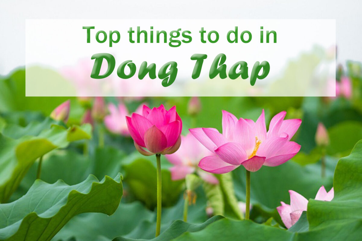 What to do in Dong Thap