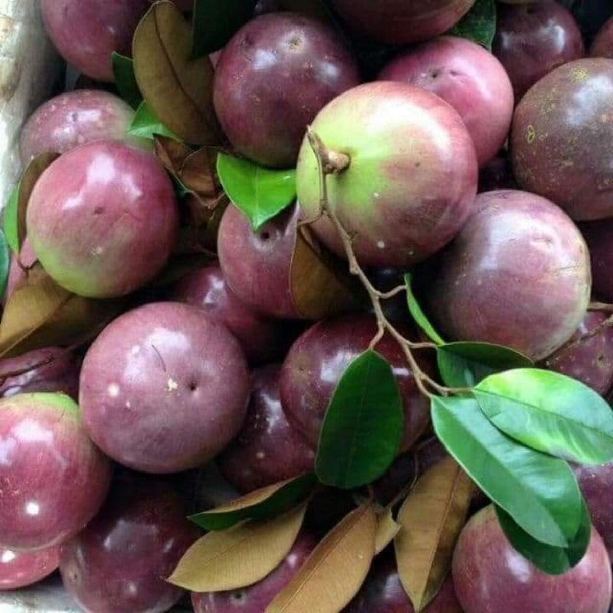 Lo Ren star apple in Tien Giang